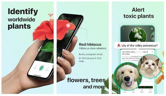 PictureThis App Features